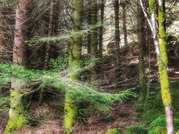 Myrdal woods.